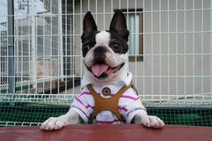 ביטוח דירה - בעלי חיים בדירה